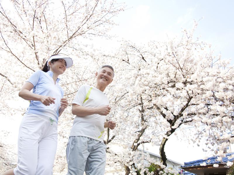 Un couple de Japonais âgés courent dans les cérisiers
